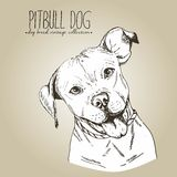 Vector close up portrait of english pitbull.  on craft brown background. Stock Photos