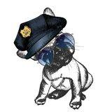 Vector close up portrait of police dog.French bulldog puppy wearing the peak cap and sunglasses. Royalty Free Stock Photography