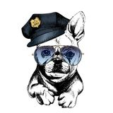 Vector close up portrait of police dog.French bulldog wearing the peak cap and sunglasses. Royalty Free Stock Photography
