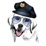 Vector close up portrait of police dog. Labrador retriever wearing the peak cap and sunglasses. Stock Photos
