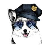 Vector close up portrait of police dog. Welsh corgi pembroke wearing the peak cap and sunglasses. Stock Images