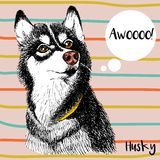 Vector close up portrait of siberian husky. Hand drawn domestic pet dog illustration. Isolated on peach background Royalty Free Stock Photo