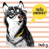 Vector close up portrait of siberian husky wearing the sunglassess. Bright hello summer husky portrait. Royalty Free Stock Image