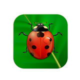 Vector close-up realistic icon with ladybug on leaf. EPS10. Stock Photos