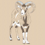 Vector closeup portrait of funny Alpine ibex Stock Photo