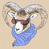 Vector closeup portrait of funny Alpine ibex Royalty Free Stock Photography