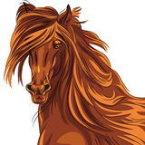 Vector closeup portrait of red horse Stock Photo