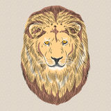 Vector closeup portrait of a serious lion. Sketch of a serious wild big cat Lion Royalty Free Stock Photo