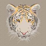 Vector closeup portrait of a serious tiger Stock Photography