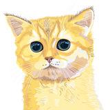 Vector closeup sketch cute lilac British  kitten Stock Photography