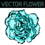 Vector clove flower with cyan petals and black edging Stock Image