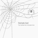 Vector cobweb Stock Photo