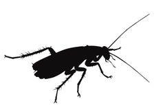 Vector cockroach Stock Photos