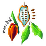 Vector cocoa pod Stock Images