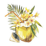 Vector coconut hand drawn sketch with palm leaf, plumeria flowers. Watercolor vector tropical food illustration Stock Photography