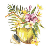 Vector coconut hand drawn sketch with palm leaf, plumeria and a pink hibiscus flowers. Watercolor vector tropical food Royalty Free Stock Photos