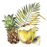 Vector coconut hand drawn sketch with Pineapple. Watercolor vector tropical food illustration. Isolated on white. Background Stock Photography
