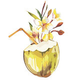 Vector coconut hand drawn sketch with plumeria flowers. Watercolor vector tropical food illustration. Isolated on white Royalty Free Stock Photos