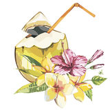 Vector coconut hand drawn sketch with plumeria and a pink hibiscus flowers. Watercolor vector tropical food illustration. On white background Royalty Free Stock Photo