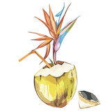 Vector coconut hand drawn sketch with strelitzia flowers. Watercolor vector tropical food illustration. Isolated on Stock Image