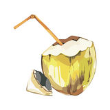 Vector coconut hand drawn sketch. Watercolor vector tropical food illustration. Isolated on white background. Vector coconut hand drawn sketch. Watercolor Stock Photo