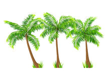 Vector coconut palm trees set isolated on white Royalty Free Stock Image