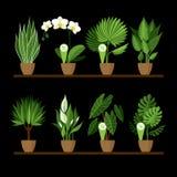 Vector a coleção de interno, plantas da casa em uns potenciômetros em uma prateleira Fotos de Stock Royalty Free