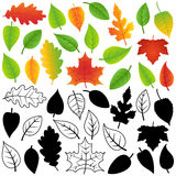 Vector Collection of Autumn, Silhouettes and Outline Leaves Stock Image