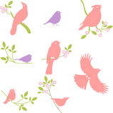 Vector Collection of Bird Silhouettes, colored silhouettes. Royalty Free Stock Photography