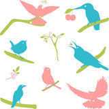 Vector Collection of Bird Silhouettes, colored silhouettes. Royalty Free Stock Photos