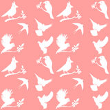 Vector Collection of Bird Silhouettes on a pink background Royalty Free Stock Image