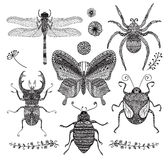 Vector Collection of Black Hand Drawn Doodle Insects Royalty Free Stock Photo