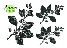 Vector collection of silhouette mate branches. Shape vintage set Royalty Free Stock Photos