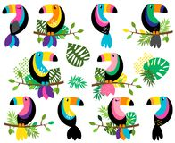 Vector Collection of Bright and Colorful Toucans and Tropical Leaves stock illustration