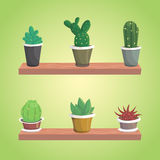 Vector collection of cactus. Cute  cacti. Eps10 Royalty Free Stock Images