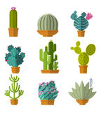 Vector collection of cactus in flat style Stock Image