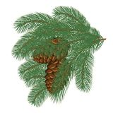 Tree branches with pine cones. Vector collection of Christmas tree branches with pine cones Royalty Free Stock Photo