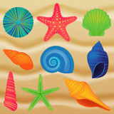 Vector Collection of Colorful Shells Stock Photos