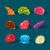 Vector Collection of Colorful Shells Royalty Free Stock Photo