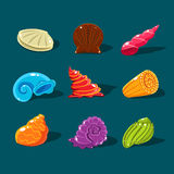 Vector Collection of Colorful Shells Stock Images