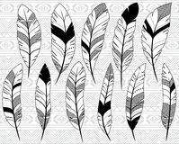 Vector Collection of Doodle Stylized Feathers Stock Photos