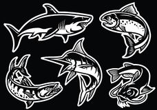 Collection of fish in black and white. Vector of collection of fish in black and white Stock Photos