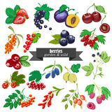Vector collection of  garden and wild berries. Vector illustration for your design Royalty Free Stock Image