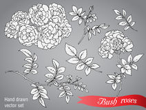 Vector collection of  hand drawn bush roses. On grey background Royalty Free Stock Images