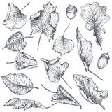 Vector collection of hand drawn dry autumn leaves Stock Images