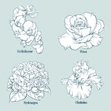 Vector collection of hand drawn floral illustration . Stock Photography