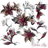 Vector collection of hand drawn lily flowers in engraved style Royalty Free Stock Photography