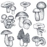 Vector collection of hand drawn mushrooms in sketch style Stock Photo