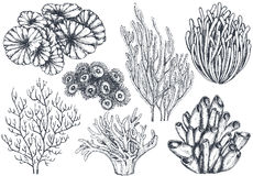 Vector collection of hand drawn ocean plants and coral reef elements. In sketch style isolated on white. Monochrome graphic set Stock Photos