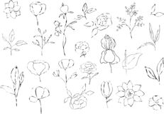 Vector collection of hand drawn plants. Botanical set vector illustration
